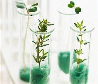 Вкоренител за цветя, храсти и дървета. Вкоренител за резници. (Ризопон)